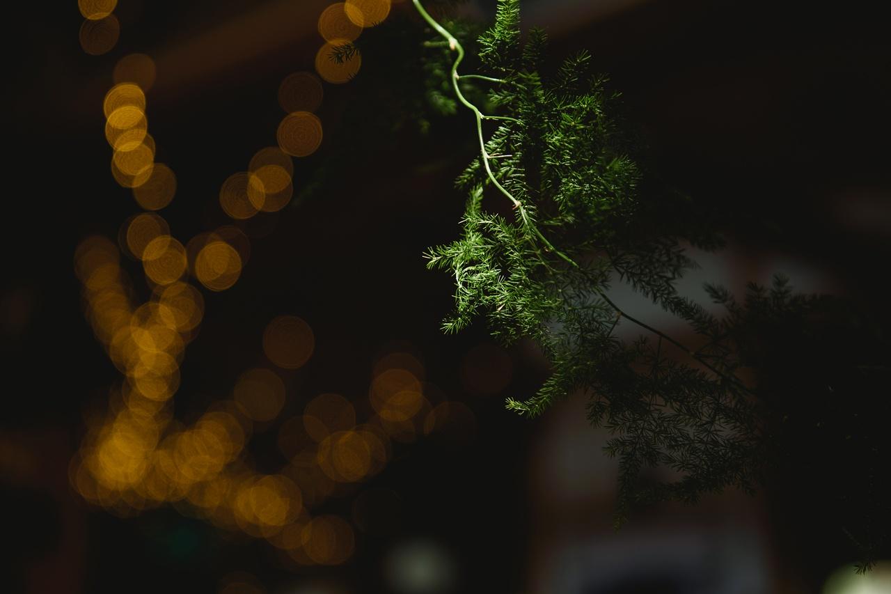 rośliny do dekoracji sali weselnej